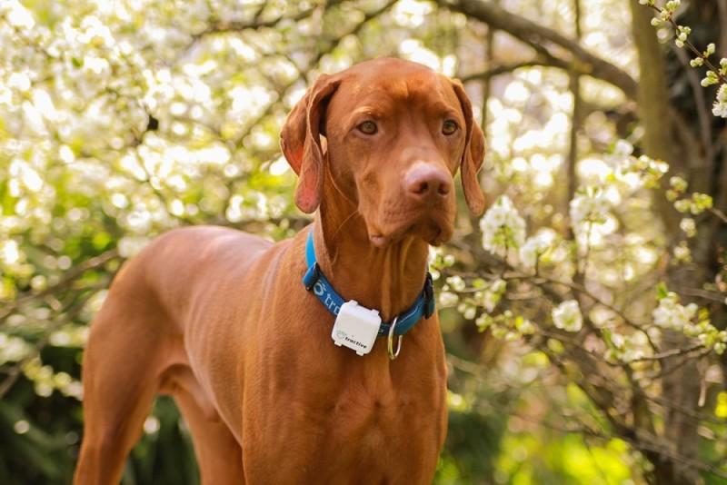 Tractive GPS Ortungsgerät für Hunde