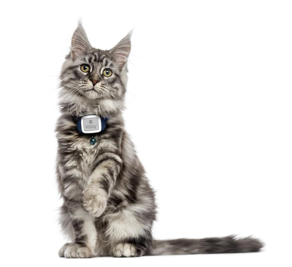 GPS Tracker für Haustiere
