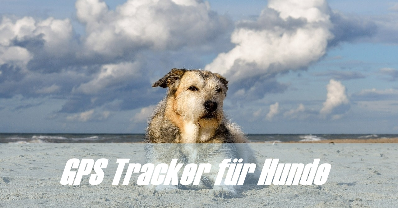 GPS Tracker Hund